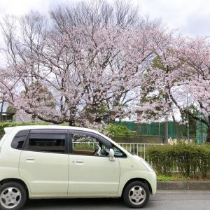 今年の桜とお仕事の話。