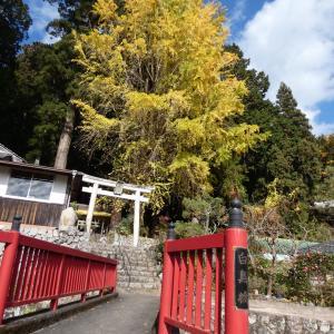 奈良県宇陀市の紅葉