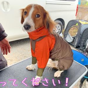 愛犬と洋服と常時SSL化