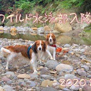 てぃくくと ワイルド水泳部入隊2020篇