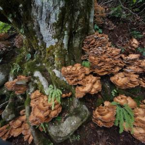 自然彷徨 裏磐梯・原生の森