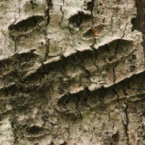 自然彷徨 熊の爪痕
