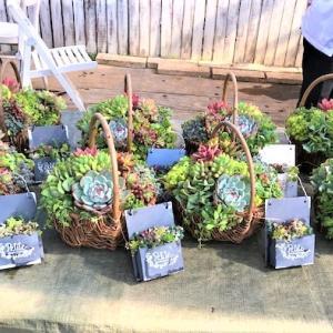 JA東方支店婦人部の多肉植物の寄せ植え