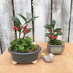 冬の小さな盆栽