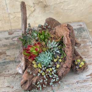 流木鉢を制作&多肉植物を植えましょう!講座