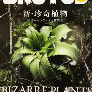 BRUTUS新・珍奇植物