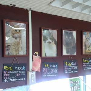 山形の猫カフェ、『ねこコレ』にハマってます。駐車場は無いから注意です