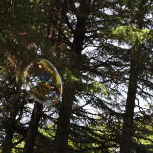 木登り・・ツリーイング