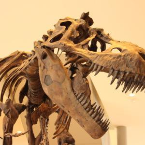 アルバータ大学で古生物学を学ぶには