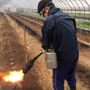 アスパラ農業研修 ~ 消毒作業 ~