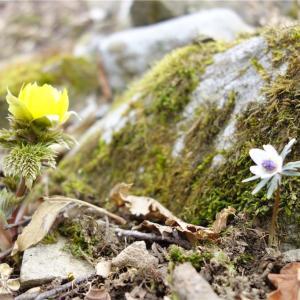 春と冬の間