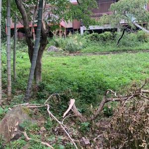 台風被害!木が折れる