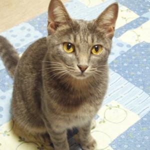 <飼い猫を探しています。ご協力よろしくお願いします!>