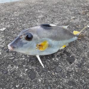 沖堤でシロギス釣り