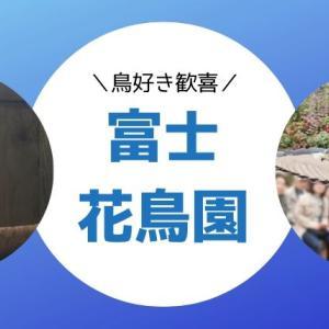 富士花鳥園の楽しみ方|コールダックにエサやりをせよ!ふれあいが超楽しい