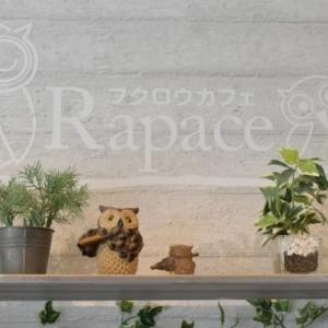 町田のフクロウカフェRapace(ラパーチェ)の感想!珍しいふくろうに会えるカフェ