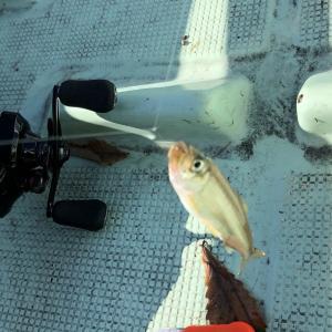 ワカサギ釣りは意外に「難しい釣り」な話!