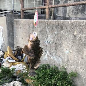 6月の安謝川河口でナニが釣れた!?【沖縄ルアー】