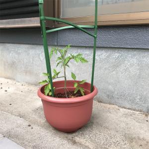 【素人】家庭菜園やるってよ【トマト】【ミニマリスト志望主婦の日常】