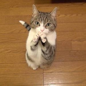【超画像】猫、おねだりしてしまう