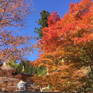 今年の高野山は紅葉がやや遅れ気味