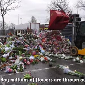 世界最大の花市場 ロイヤルフローラホランドが危機に瀕してる!?