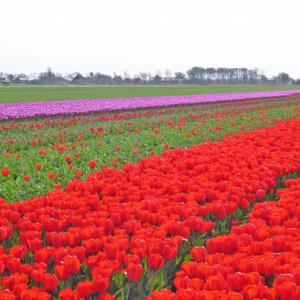 オランダ・アムステルダム観光情報-コロナウイルス対応で観光地への制限は?