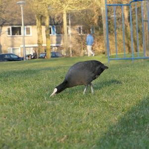 オランダで家の周りを小さいコンデジカメラを持って散歩すると面白い写真が撮れる