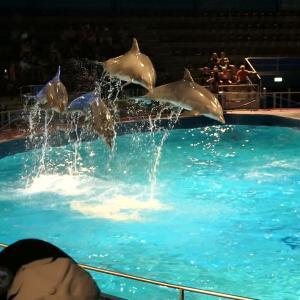 オランダ唯一!赤ちゃんイルカが目の前で見れるイルカ専門水族館