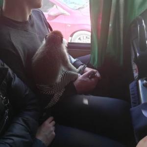 【つぶやき⑪】バスに!!!おさるさん!?