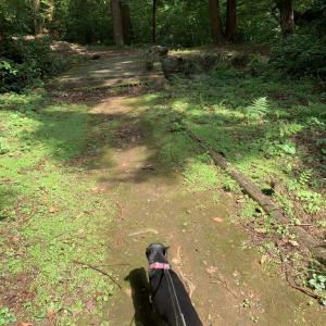 テンちゃん森を歩く