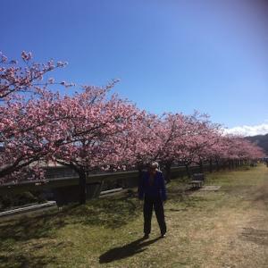 桜と富士、日本だねぇ