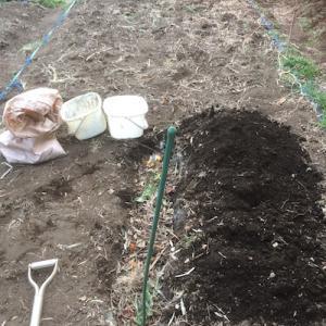 楽しい土中堆肥!