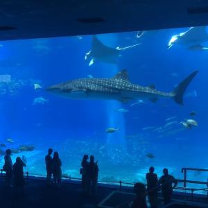 【美ら海水族館に近い!! オーシャンビュー】沖縄おすすめホテル本部町②