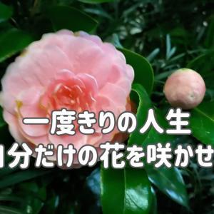 一度きりの人生…自分だけの花を咲かせることが出来たらとても幸せ。