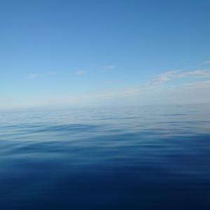 日本海で5魚種ヒット!と、思ったらサクラマス?