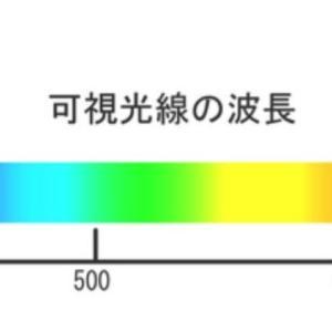 アオリイカの餌木は何色?青緑の波長の光を強く感知?