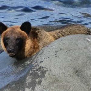 【サケマス釣り】クマが来たら3秒で逃げろ!