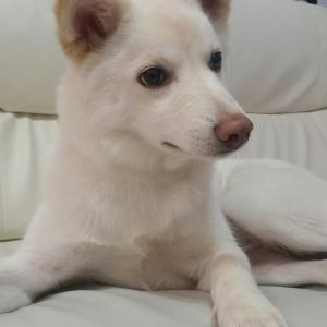 ワン子(15) ビビリ犬