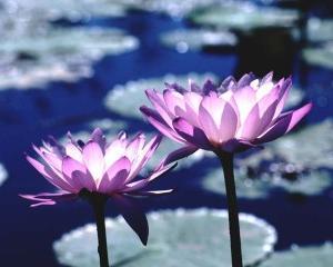 日蓮教義の小話 (6) 本物の題目