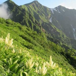 鹿島槍ヶ岳 高山植物とライチョウとの出会い