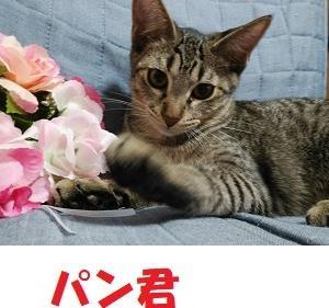 10/27参加*パン&マリー&ローズ