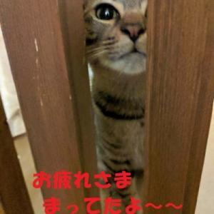 1/26 参加猫 りん君 こすもすちゃん兄妹