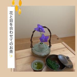朝茶習慣93日目!お花と目を合わせてのお茶