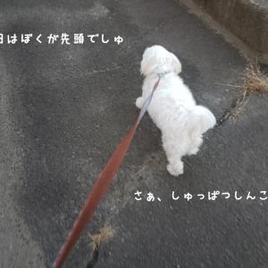 今日のお散歩リーダーは?
