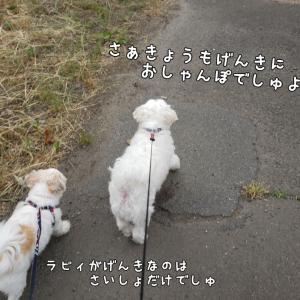 今日の4コマ(お散歩編)