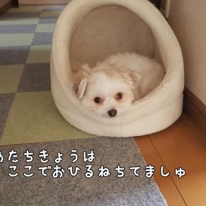 テトちゃんどこ?