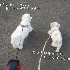 今日はお散歩日和