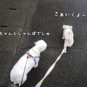 急いでお散歩へ