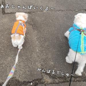 またまたDAISOの犬服